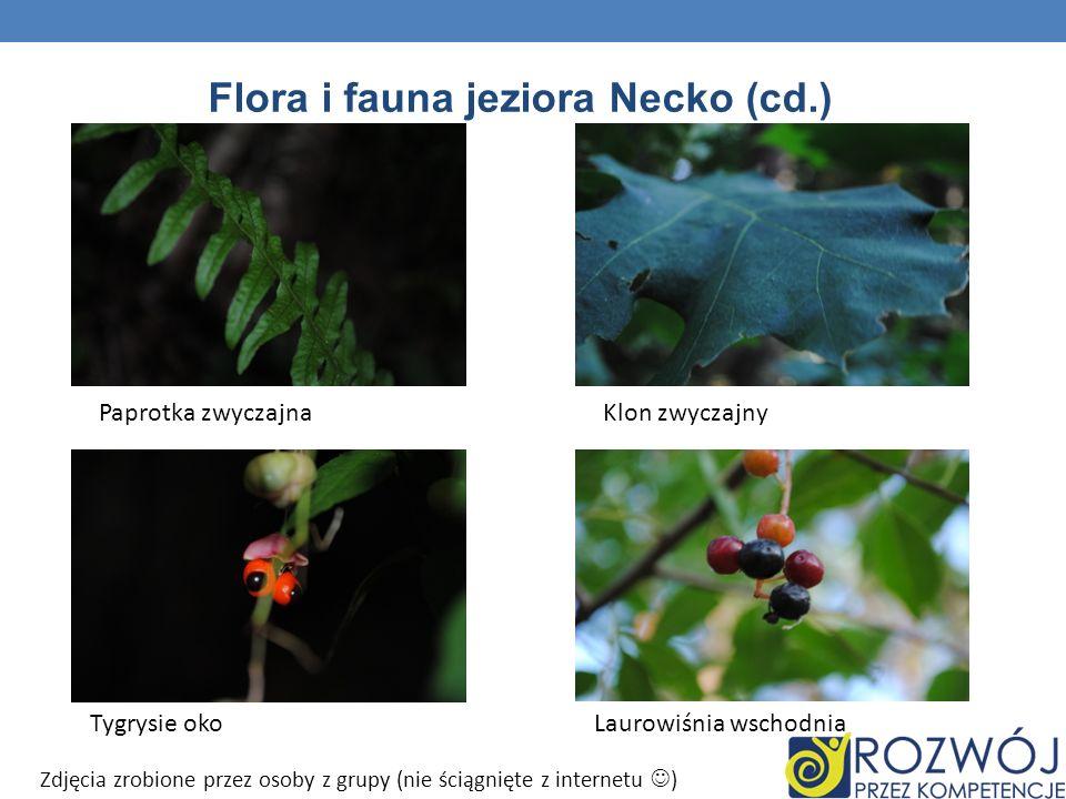 Flora i fauna jeziora Necko (cd.) Paprotka zwyczajnaKlon zwyczajny Tygrysie okoLaurowiśnia wschodnia Zdjęcia zrobione przez osoby z grupy (nie ściągni