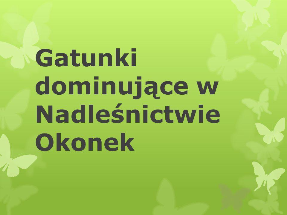Gatunki drzew przeważających w naszej gminie : liściaste - Brzoza - Buk zwyczajny - Dąb szypułkowy, bezszypułkowy - Olszę iglaste - Świerk pospolity - Modrzew europejski