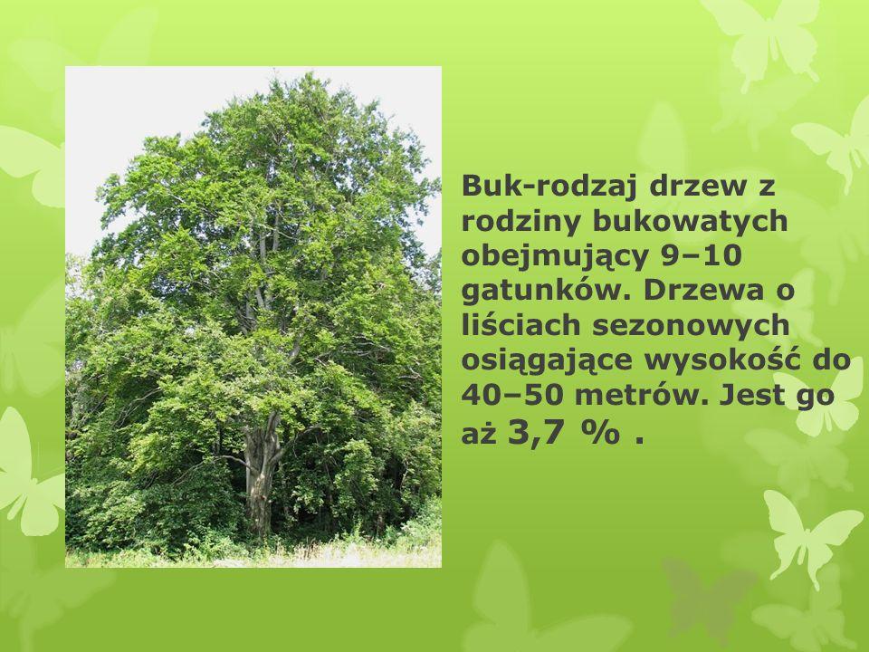 Świerk-Drzewa są wysokie i przeważnie mają regularną, stożkową koronę. Jest go aż 1,1 %