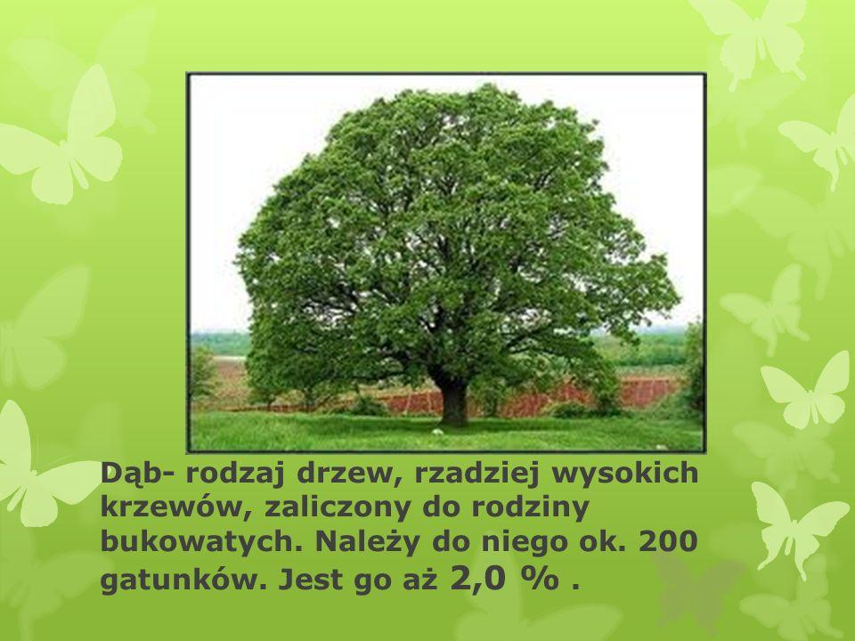 Buk-rodzaj drzew z rodziny bukowatych obejmujący 9–10 gatunków.