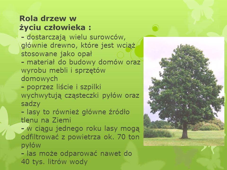 Rola drzew w życiu człowieka : - dostarczają wielu surowców, głównie drewno, które jest wciąż stosowane jako opał - materiał do budowy domów oraz wyrobu mebli i sprzętów domowych - poprzez liście i szpilki wychwytują cząsteczki pyłów oraz sadzy - lasy to również główne źródło tlenu na Ziemi - w ciągu jednego roku lasy mogą odfiltrować z powietrza ok.