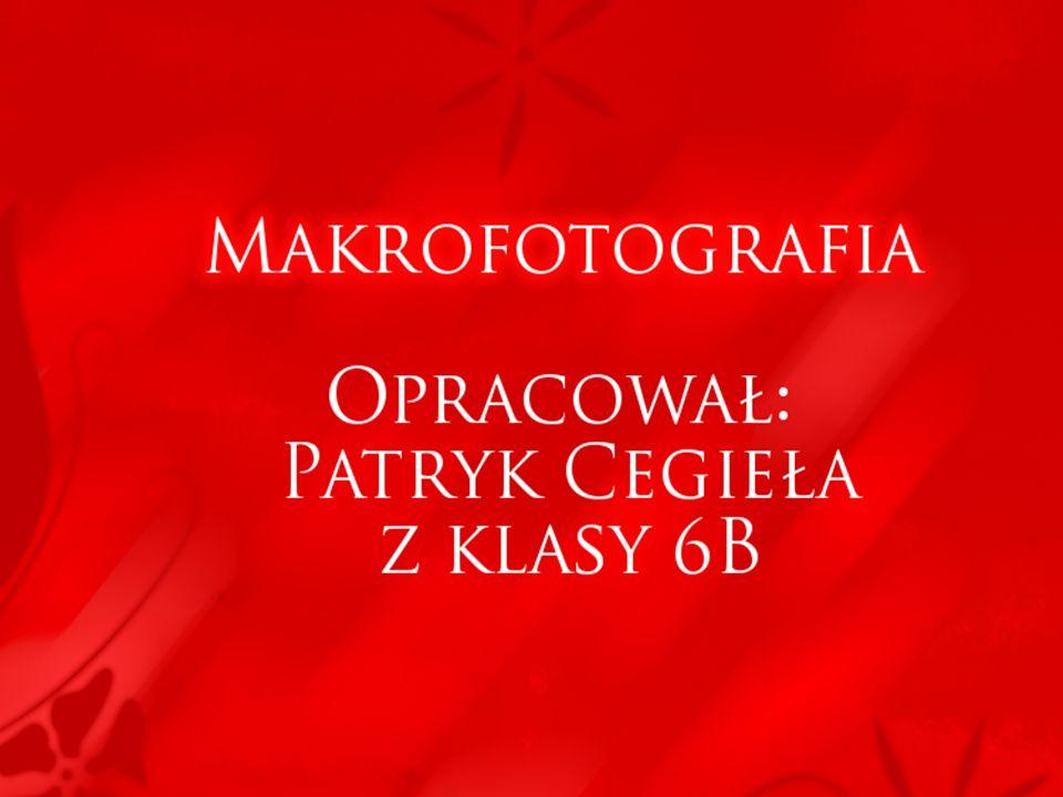 Makrofotografia Opracował: Opracował: Patryk Cegieła z klasy 6B Patryk Cegieła z klasy 6B