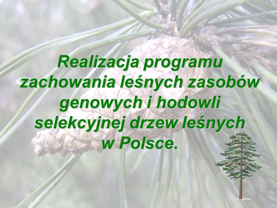 Realizacja programu zachowania leśnych zasobów genowych i hodowli selekcyjnej drzew leśnych w Polsce.