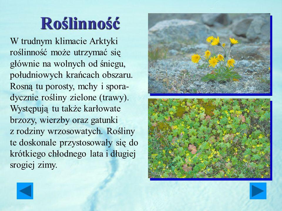 Roślinność W trudnym klimacie Arktyki roślinność może utrzymać się głównie na wolnych od śniegu, południowych krańcach obszaru. Rosną tu porosty, mchy