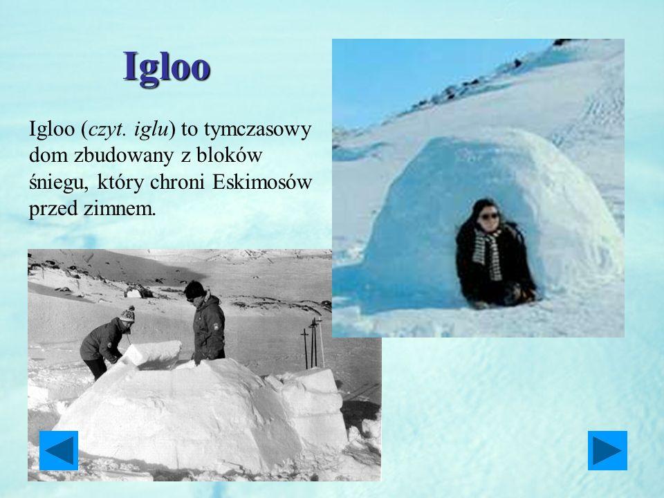 Igloo Igloo (czyt. iglu) to tymczasowy dom zbudowany z bloków śniegu, który chroni Eskimosów przed zimnem.