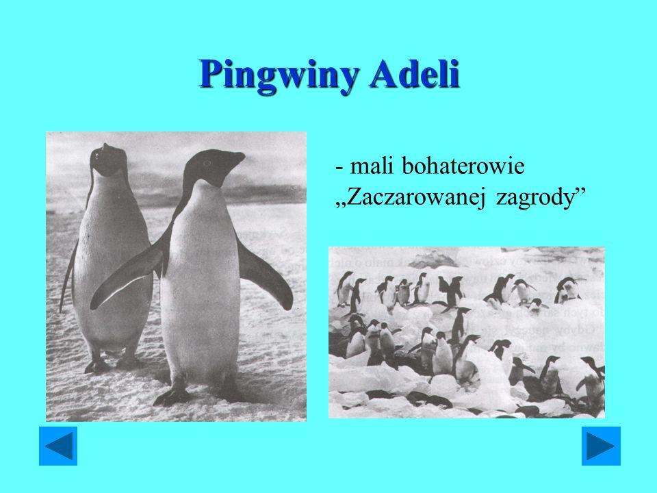 Pingwiny Adeli - mali bohaterowie Zaczarowanej zagrody