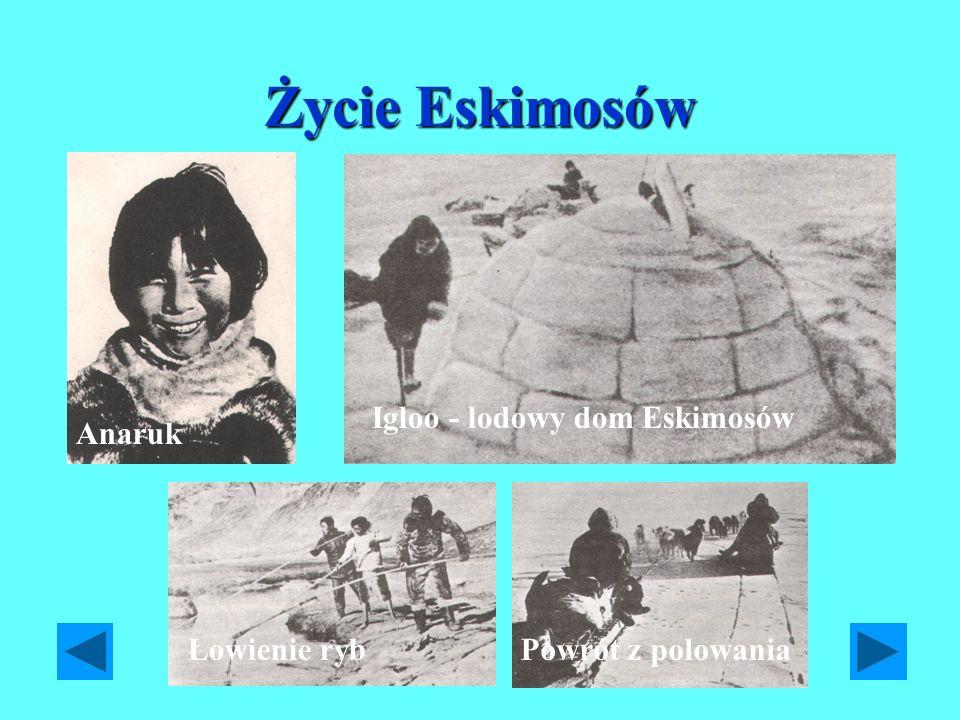 Życie Eskimosów Anaruk Igloo - lodowy dom Eskimosów Łowienie rybPowrót z polowania