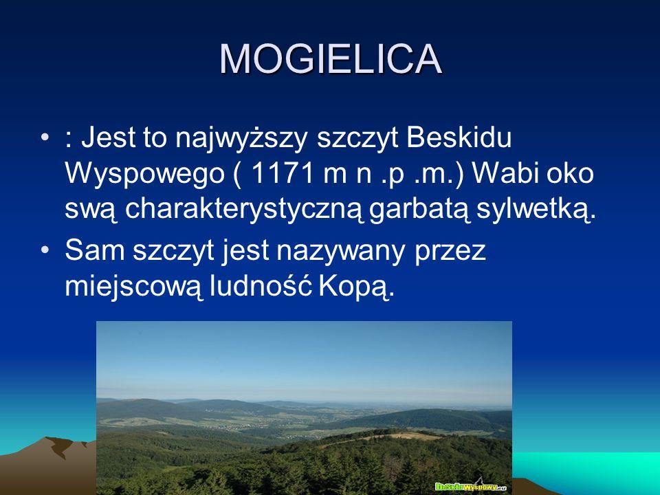 MOGIELICA : Jest to najwyższy szczyt Beskidu Wyspowego ( 1171 m n.p.m.) Wabi oko swą charakterystyczną garbatą sylwetką. Sam szczyt jest nazywany prze