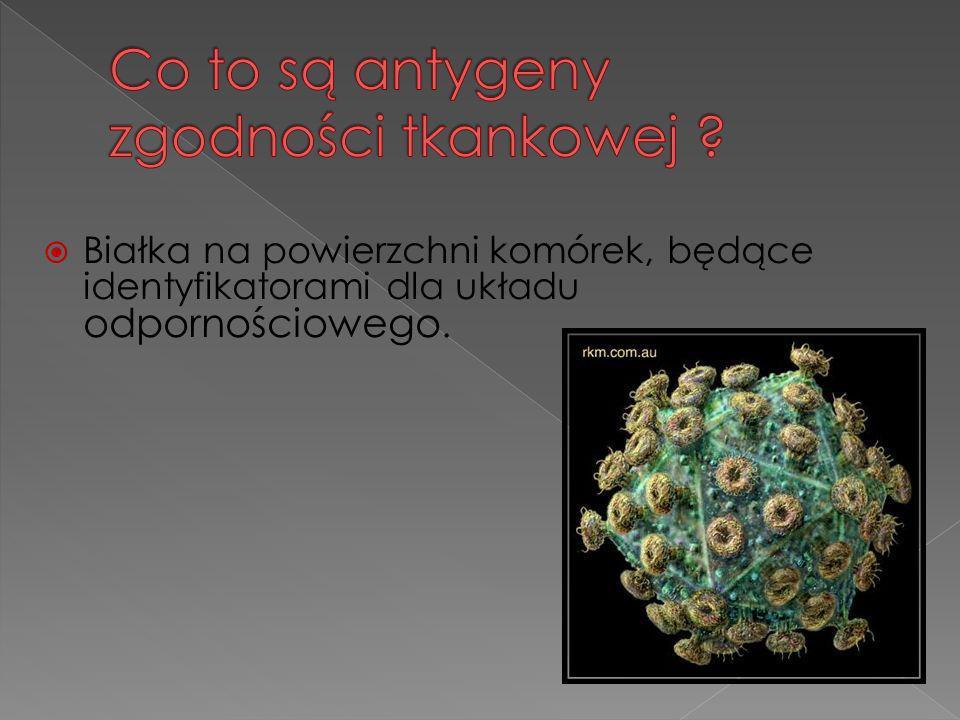 Białka na powierzchni komórek, będące identyfikatorami dla układu odpornościowego.