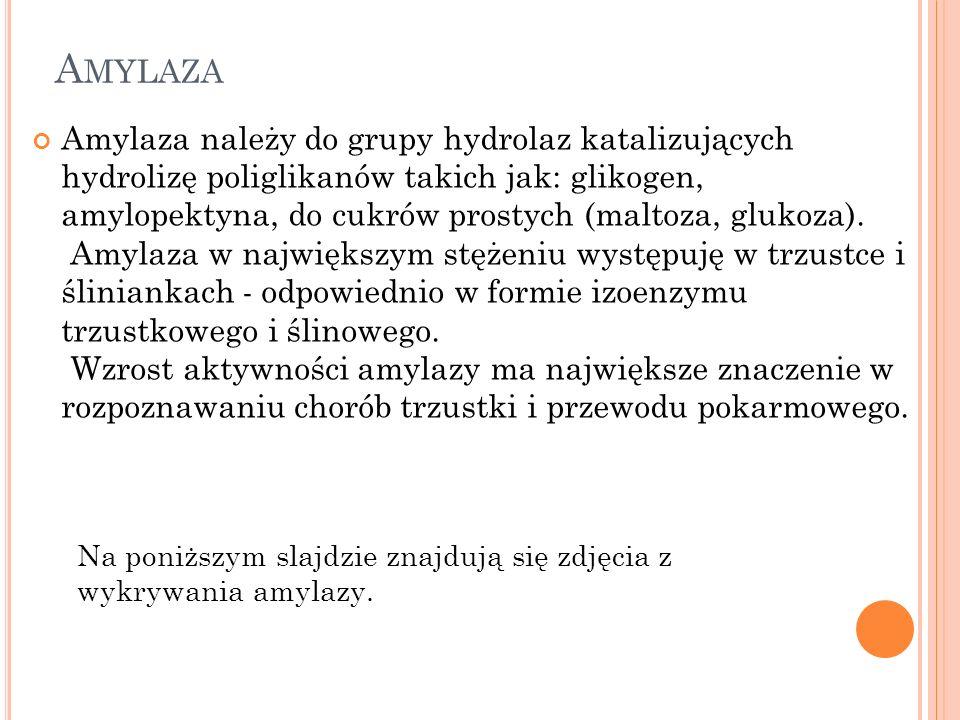 A MYLAZA Amylaza należy do grupy hydrolaz katalizujących hydrolizę poliglikanów takich jak: glikogen, amylopektyna, do cukrów prostych (maltoza, glukoza).