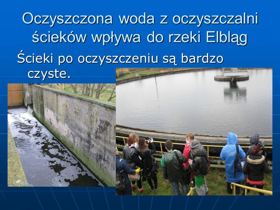 Oczyszczona woda z oczyszczalni ścieków wpływa do rzeki Elbląg Ścieki po oczyszczeniu są bardzo czyste.