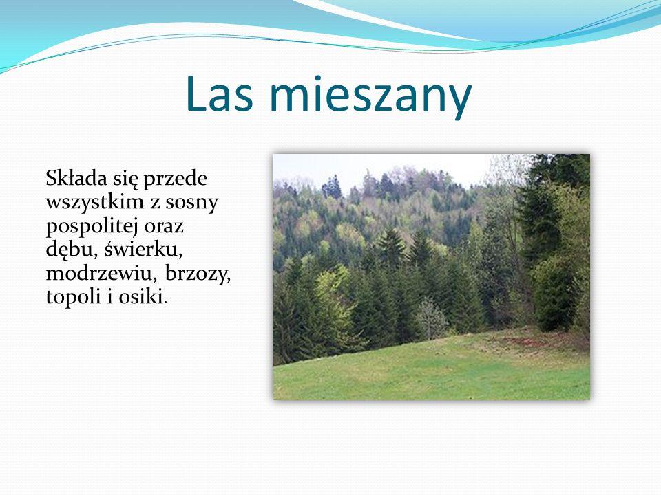 Las mieszany Składa się przede wszystkim z sosny pospolitej oraz dębu, świerku, modrzewiu, brzozy, topoli i osiki.