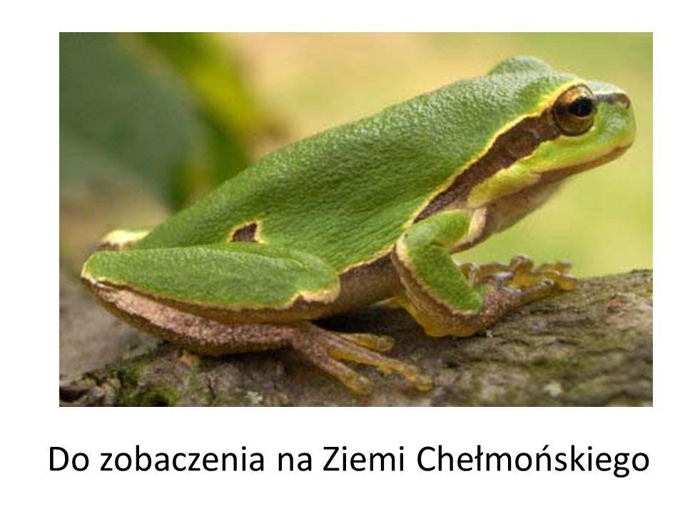 Do zobaczenia na Ziemi Chełmońskiego