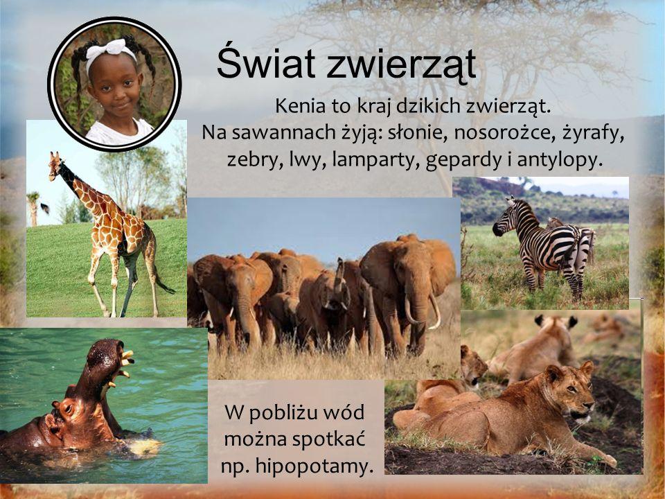 Świat zwierząt Kenia to kraj dzikich zwierząt. Na sawannach żyją: słonie, nosorożce, żyrafy, zebry, lwy, lamparty, gepardy i antylopy. W pobliżu wód m