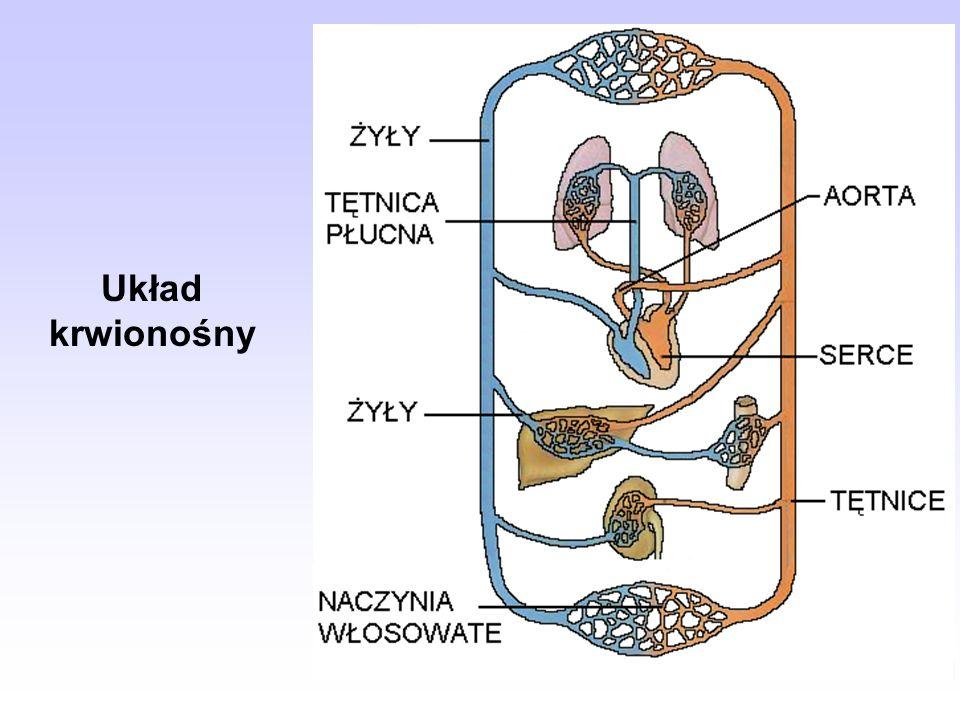 Pojemność płuc V - pojemność oddechowa, Vż - pojemność życiowa, Vwd - zapasowa pojemność wdechowa, Vz - objętość zalegająca, Vwy - zapasowa pojemność wydechowa, Vc -całkowita pojemność.