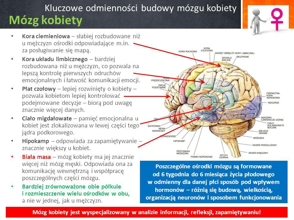 Kluczowe odmienności budowy mózgu kobiety Kora ciemieniowa – słabiej rozbudowane niż u mężczyzn ośrodki odpowiadające m.in. za posługiwanie się mapą.