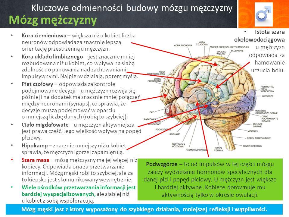 Kluczowe odmienności budowy mózgu mężczyzny Kora ciemieniowa – większa niż u kobiet liczba neuronów odpowiada za znacznie lepszą orientację przestrzenną u mężczyzn.