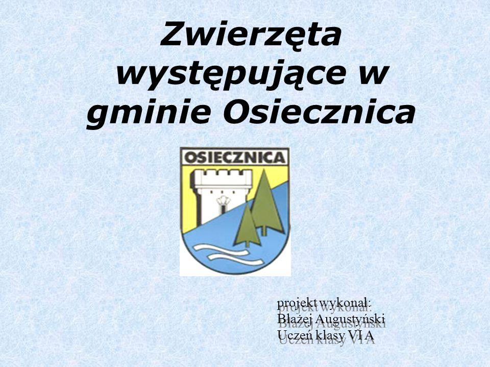 W gminie Osiecznica występuje wiele różnych gatunków zwierząt.