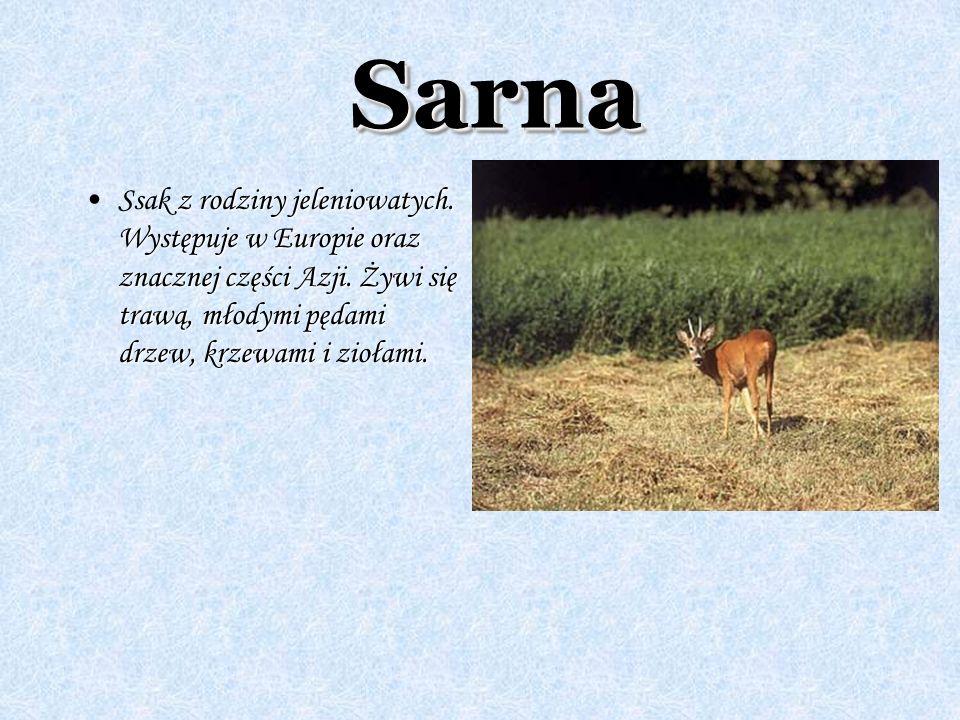 SarnaSarna z rodziny jeleniowatych. Występuje w Europie oraz znacznej części Azji. Żywi się trawą, młodymi pędami drzew, krzewami i ziołami.Ssak z rod