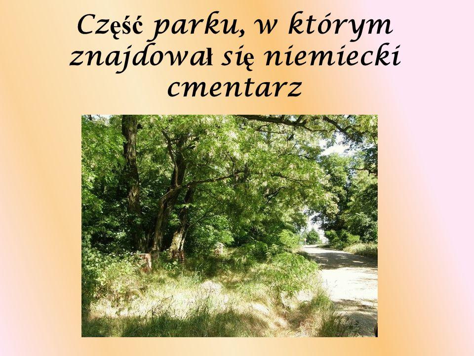 Cz ęść parku, w którym znajdowa ł si ę niemiecki cmentarz