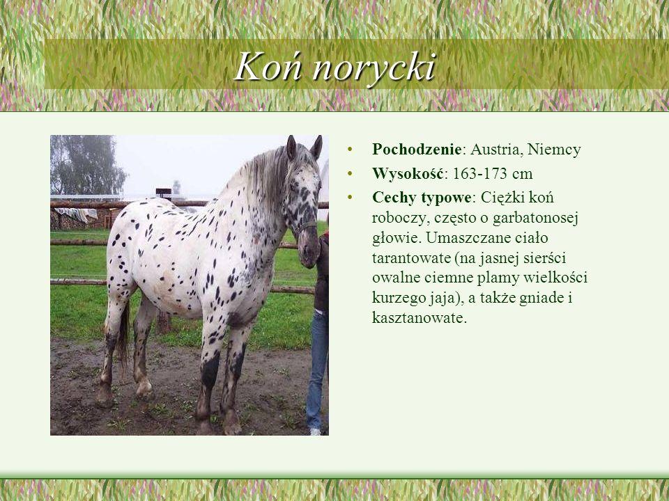 Koń norycki Pochodzenie: Austria, Niemcy Wysokość: 163-173 cm Cechy typowe: Ciężki koń roboczy, często o garbatonosej głowie. Umaszczane ciało taranto