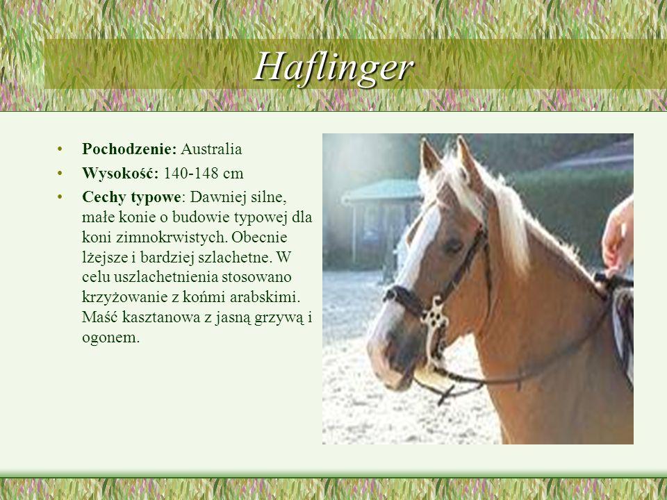 Haflinger Pochodzenie: Australia Wysokość: 140-148 cm Cechy typowe: Dawniej silne, małe konie o budowie typowej dla koni zimnokrwistych. Obecnie lżejs