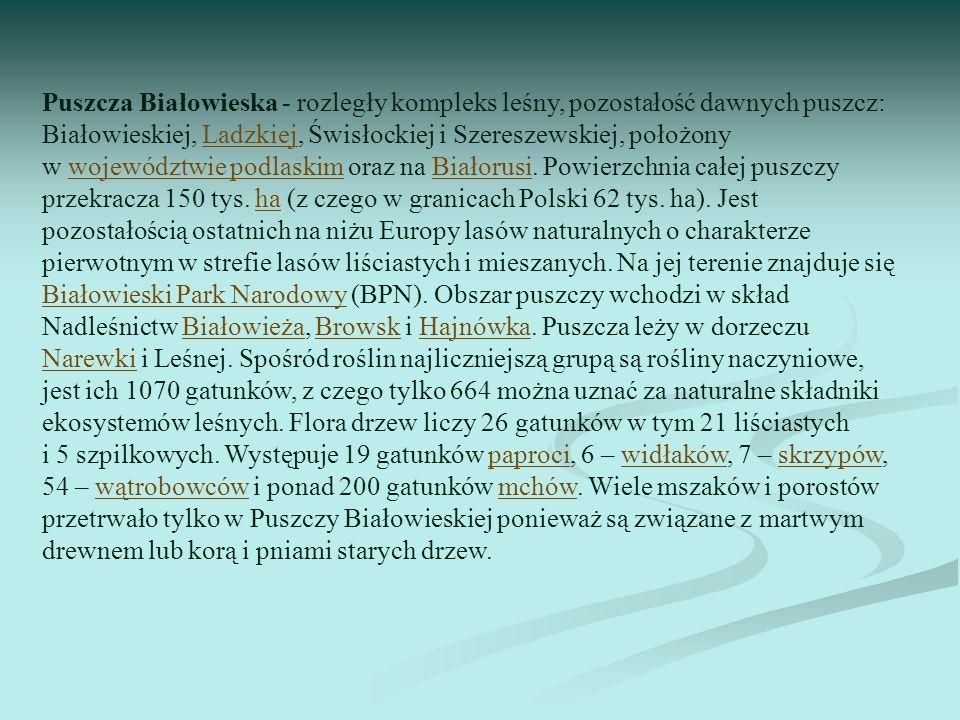 Puszcza Białowieska - rozległy kompleks leśny, pozostałość dawnych puszcz: Białowieskiej, Ladzkiej, Świsłockiej i Szereszewskiej, położony w województ