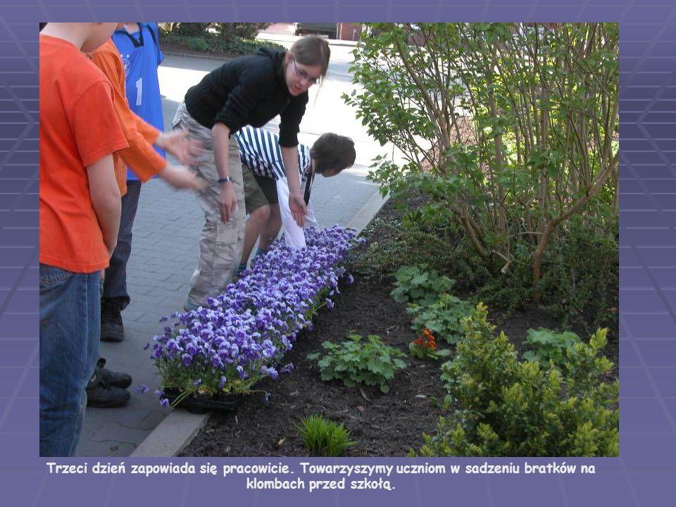 Trzeci dzień zapowiada się pracowicie. Towarzyszymy uczniom w sadzeniu bratków na klombach przed szkołą.