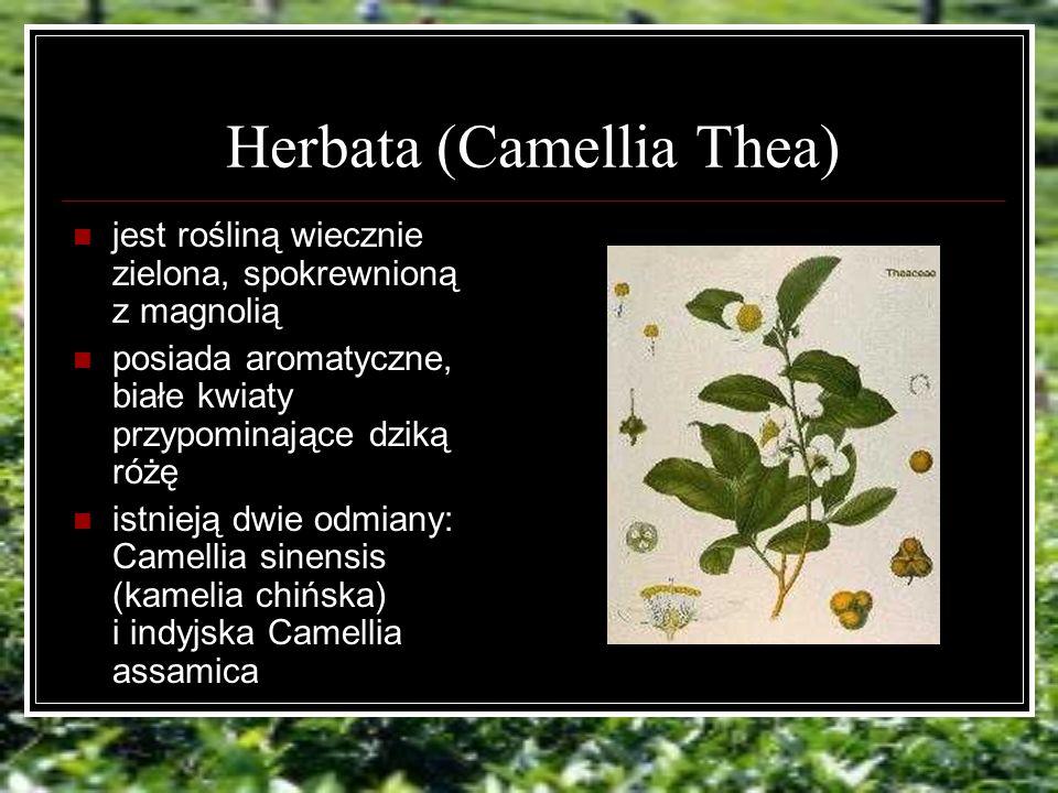 Herbata (Camellia Thea) jest rośliną wiecznie zielona, spokrewnioną z magnolią posiada aromatyczne, białe kwiaty przypominające dziką różę istnieją dwie odmiany: Camellia sinensis (kamelia chińska) i indyjska Camellia assamica