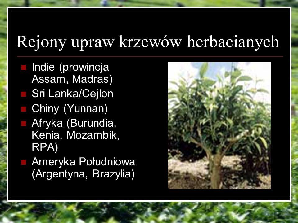 Rejony upraw krzewów herbacianych Indie (prowincja Assam, Madras) Sri Lanka/Cejlon Chiny (Yunnan) Afryka (Burundia, Kenia, Mozambik, RPA) Ameryka Południowa (Argentyna, Brazylia)