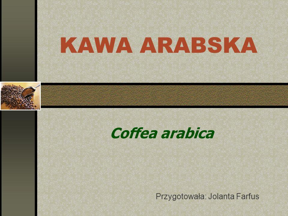 KAWA ARABSKA Coffea arabica Przygotowała: Jolanta Farfus