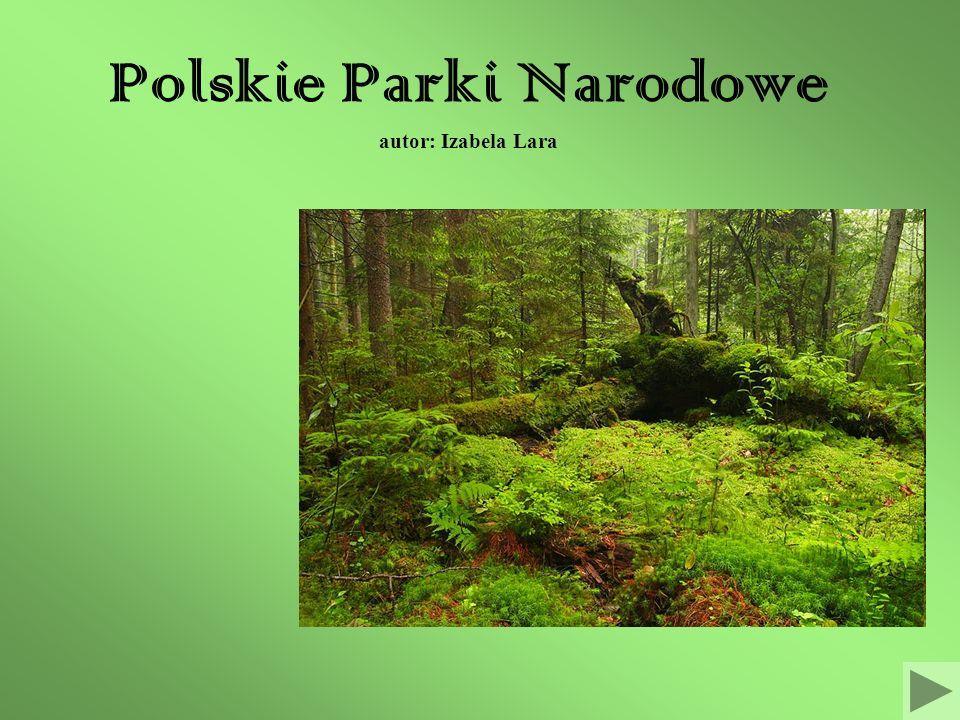 Polskie Parki Narodowe autor: Izabela Lara