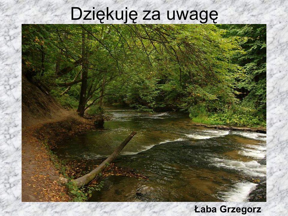Dziękuję za uwagę Łaba Grzegorz