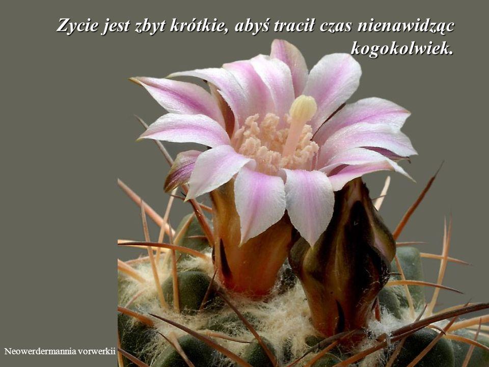 Echinocereus klapperi Porzuć negatywne myśli o rzeczach, na które nie masz wpływu. Użyj swej pozytywnej energii do rozwiązywania bieżących problemów