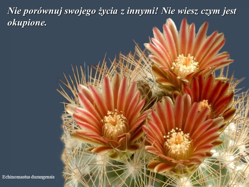 Echinocereus subinermis Nie musisz wygrać w każdej dyskusji. Zgódź się z tym, że ktoś może mieć inne zdanie.