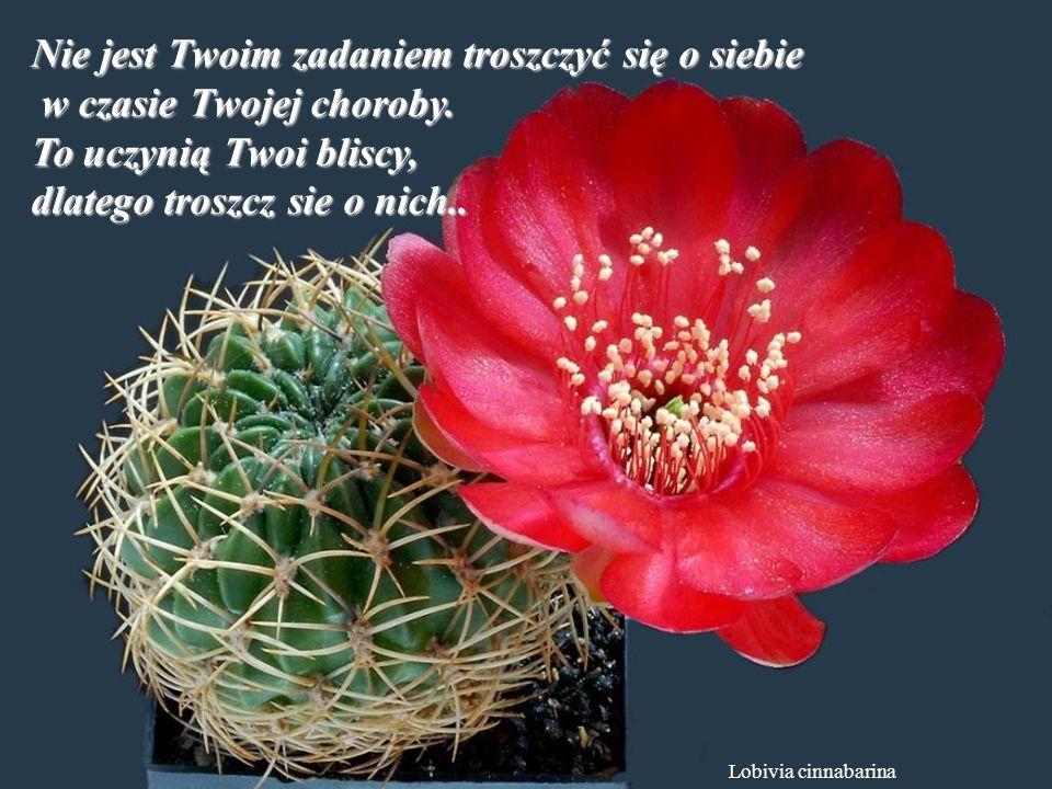 Ferobergia hybride Pogódź się z przeszłościa, nie będzie Ci psuć współczesności.