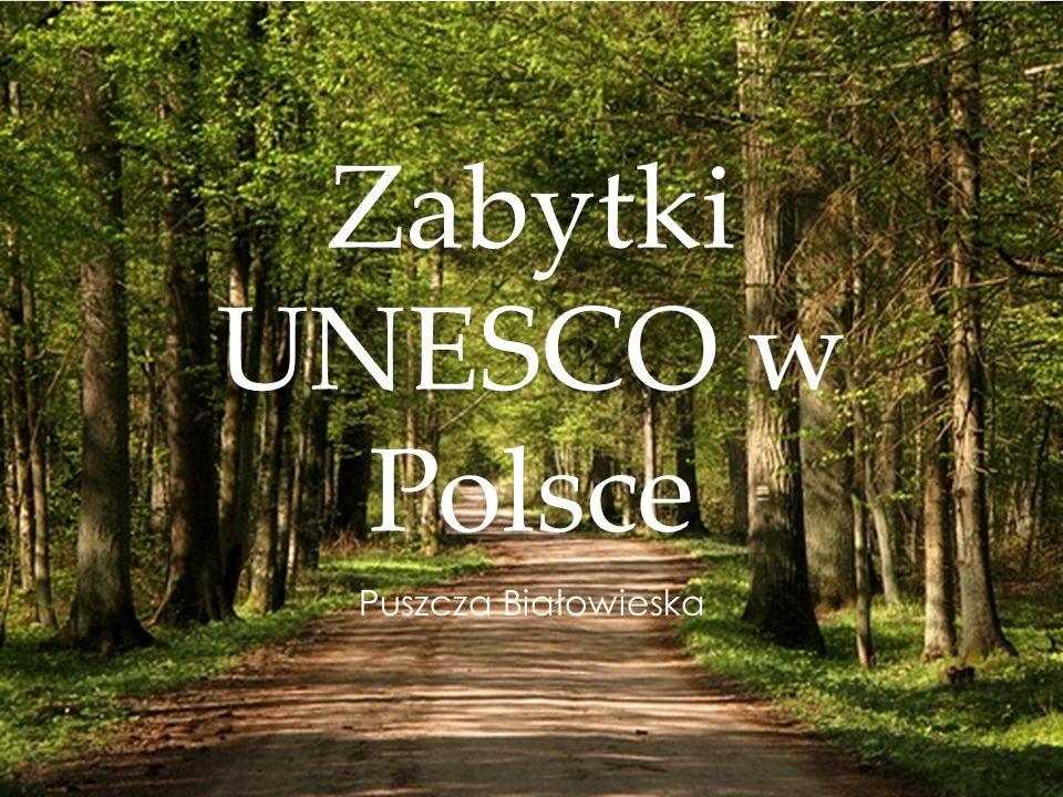 Zabytki UNESCO w Polsce Puszcza Białowieska