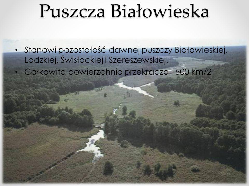 Stanowi pozostałość dawnej puszczy Białowieskiej, Ladzkiej, Świsłockiej i Szereszewskiej. Całkowita powierzchnia przekracza 1500 km/2