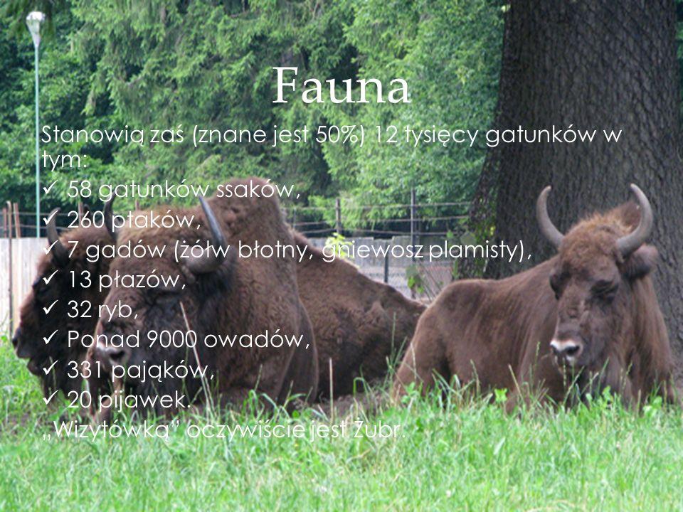 Fauna Stanowią zaś (znane jest 50%) 12 tysięcy gatunków w tym: 58 gatunków ssaków, 260 ptaków, 7 gadów (żółw błotny, gniewosz plamisty), 13 płazów, 32 ryb, Ponad 9000 owadów, 331 pająków, 20 pijawek.