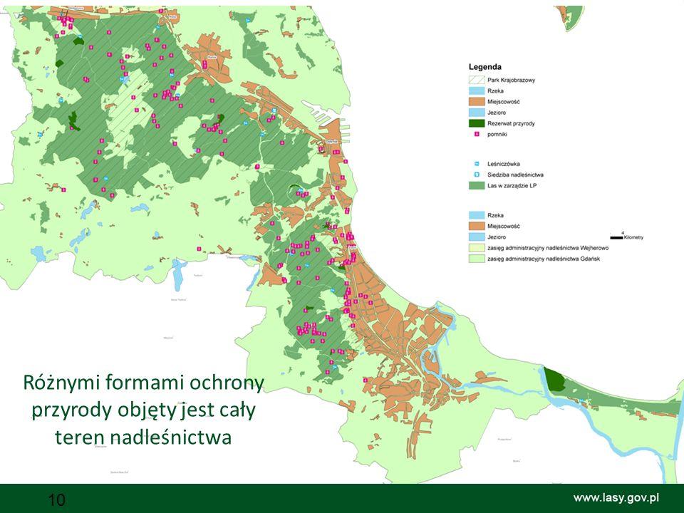 10 Różnymi formami ochrony przyrody objęty jest cały teren nadleśnictwa