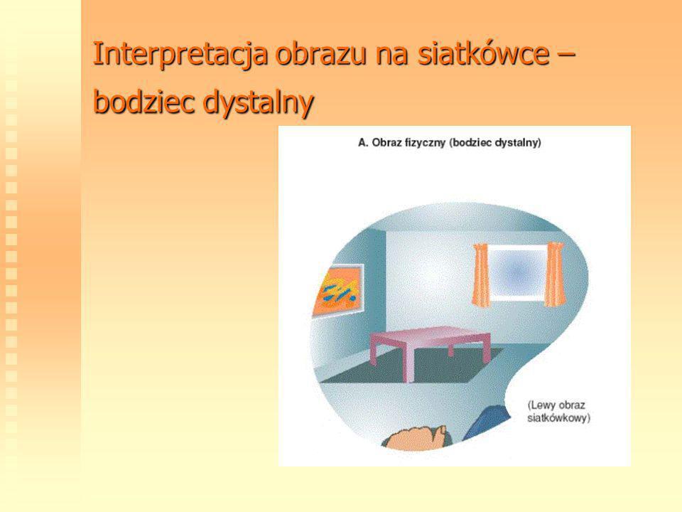 Interpretacja obrazu na siatkówce – bodziec dystalny