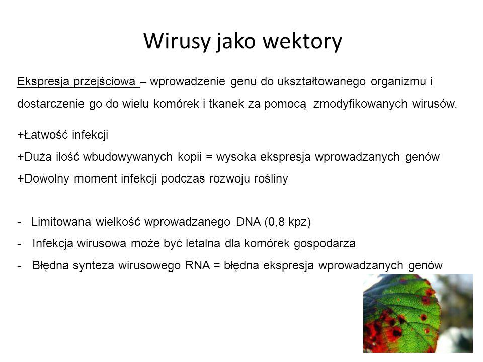 Wirusy jako wektory +Łatwość infekcji +Duża ilość wbudowywanych kopii = wysoka ekspresja wprowadzanych genów +Dowolny moment infekcji podczas rozwoju