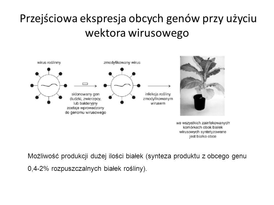 Przejściowa ekspresja obcych genów przy użyciu wektora wirusowego Możliwość produkcji dużej ilości białek (synteza produktu z obcego genu 0,4-2% rozpu