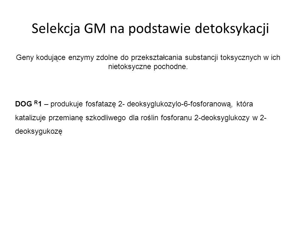 Selekcja GM na podstawie detoksykacji Geny kodujące enzymy zdolne do przekształcania substancji toksycznych w ich nietoksyczne pochodne. DOG R 1 – pro