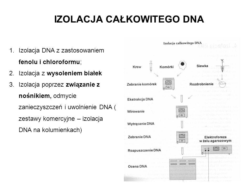 IZOLACJA CAŁKOWITEGO DNA 1.Izolacja DNA z zastosowaniem fenolu i chloroformu; 2.Izolacja z wysoleniem białek 3.Izolacja poprzez związanie z nośnikiem,