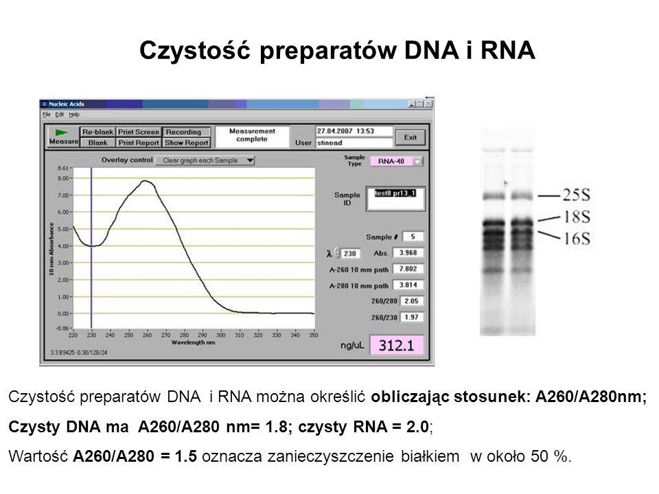 Czystość preparatów DNA i RNA Czystość preparatów DNA i RNA można określić obliczając stosunek: A260/A280nm; Czysty DNA ma A260/A280 nm= 1.8; czysty R