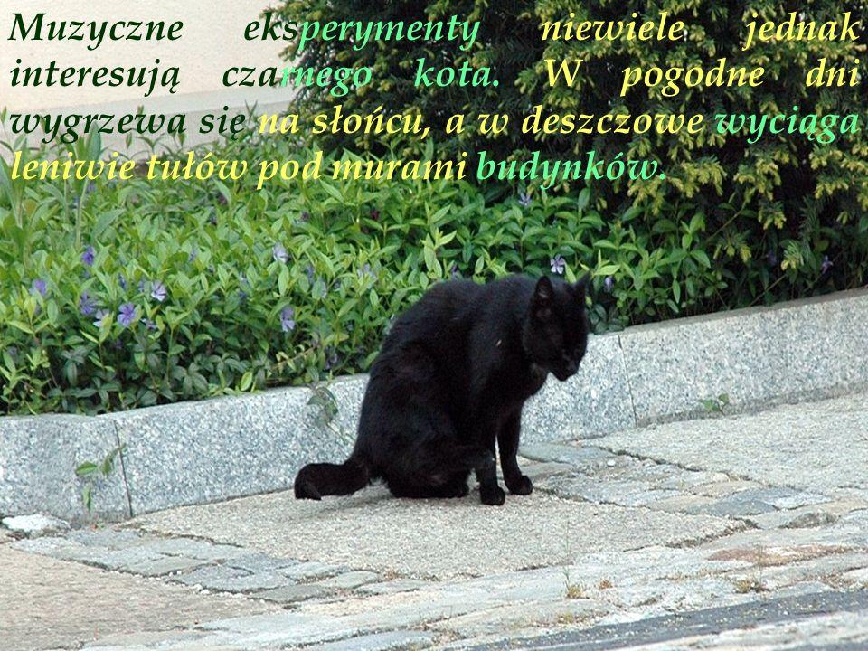 Muzyczne eksperymenty niewiele jednak interesują czarnego kota.
