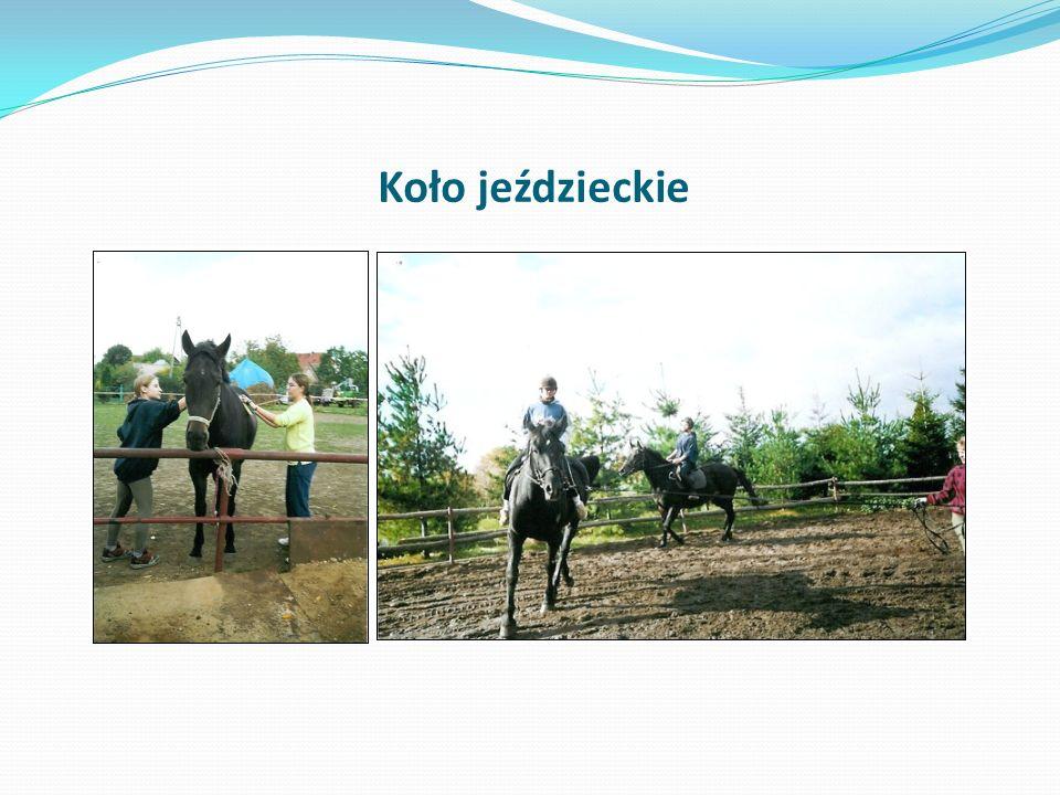 Koło jeździeckie