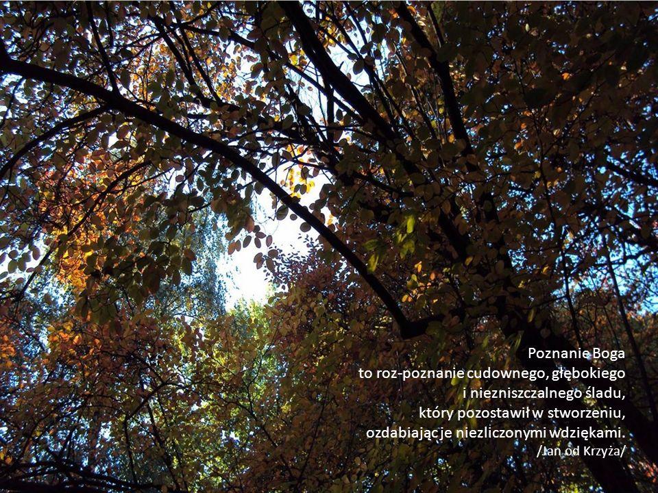 Poznanie Boga to roz-poznanie cudownego, głębokiego i niezniszczalnego śladu, który pozostawił w stworzeniu, ozdabiając je niezliczonymi wdziękami. /J