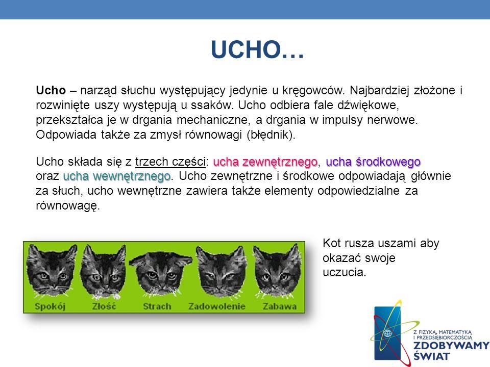 UCHO… Ucho – narząd słuchu występujący jedynie u kręgowców. Najbardziej złożone i rozwinięte uszy występują u ssaków. Ucho odbiera fale dźwiękowe, prz